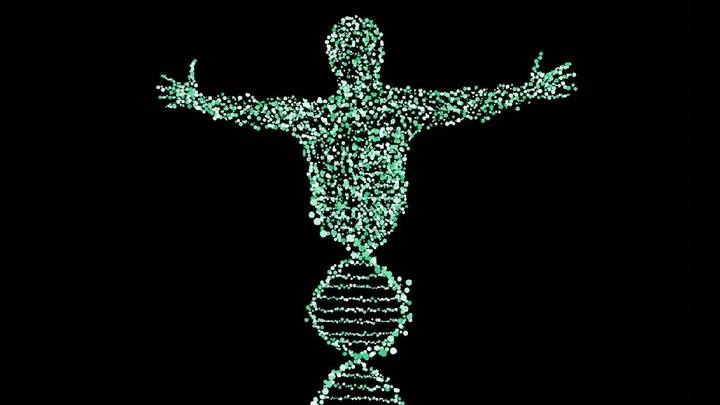 Геном жизнеспособного эмбриона человека впервые отредактирован в США