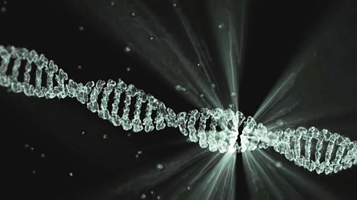 ГМО без ГМО: отредактировать ДНК можно без введения чужих генов